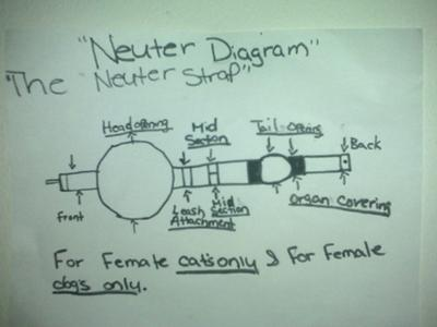 The diagram of my neuter strap..